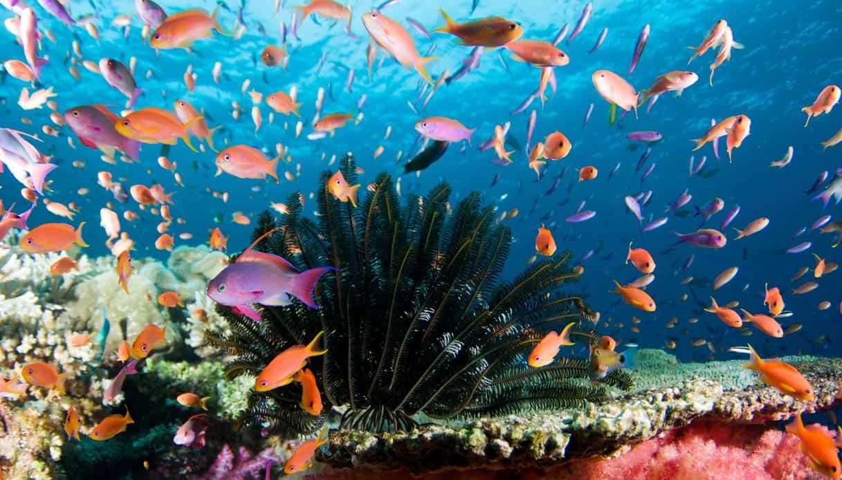 fiji barriera corallina